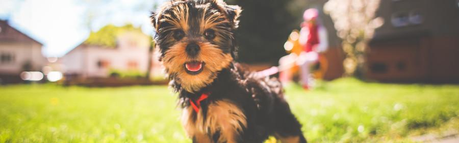 Myths vs. Facts: 11 Pet Myths Set Straight