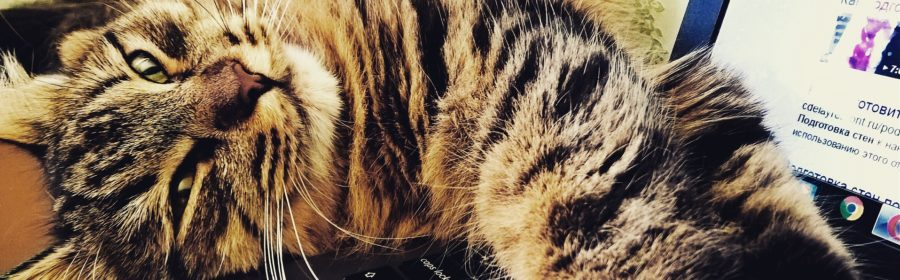 The 10 Coolest Pets on the Internet