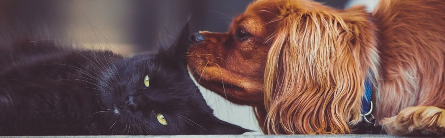 Help Your Pet Adjust to Their New Home