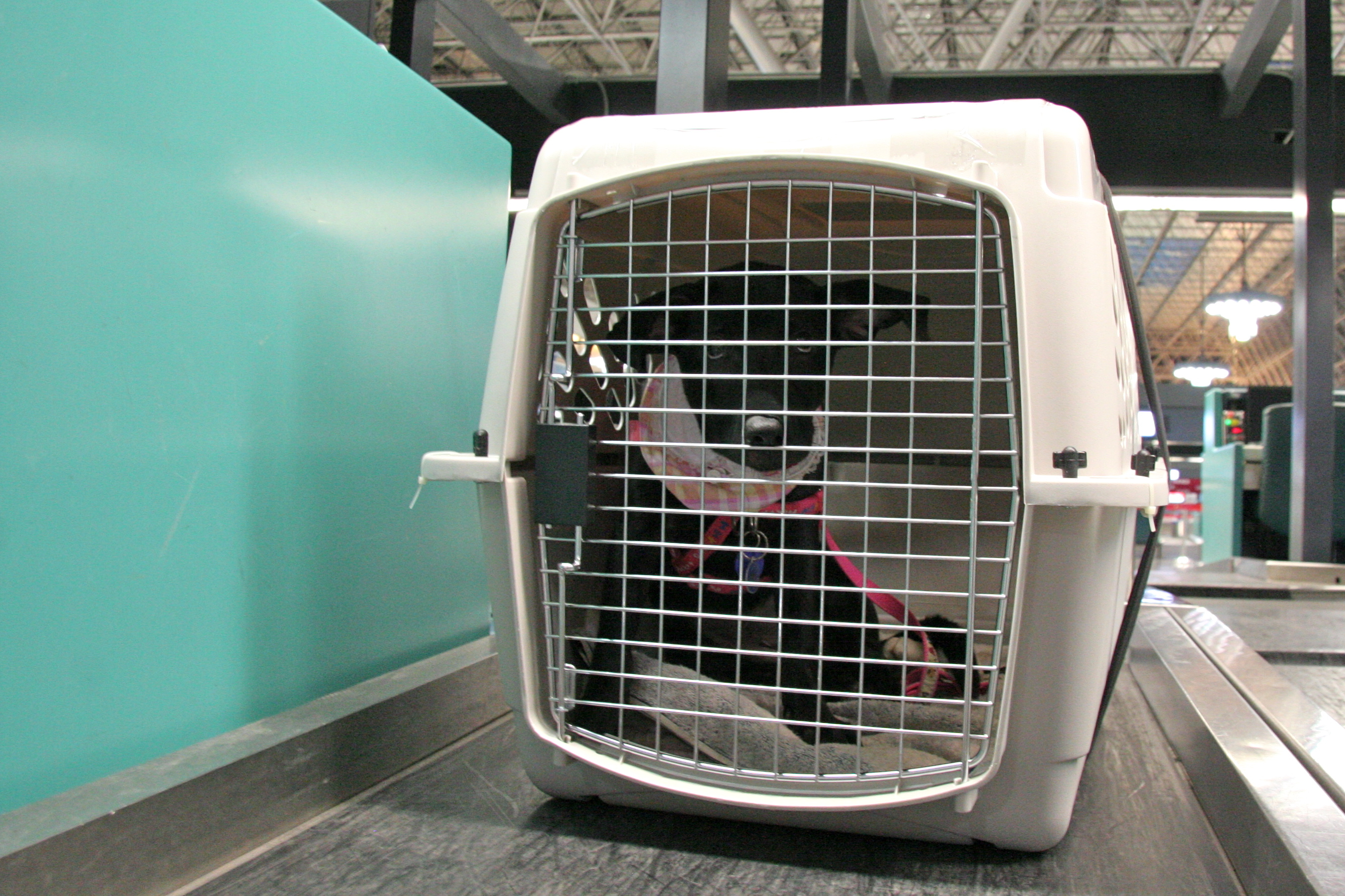 Everything You Need To Know About Airline Pet Policies Project Pawsitivity
