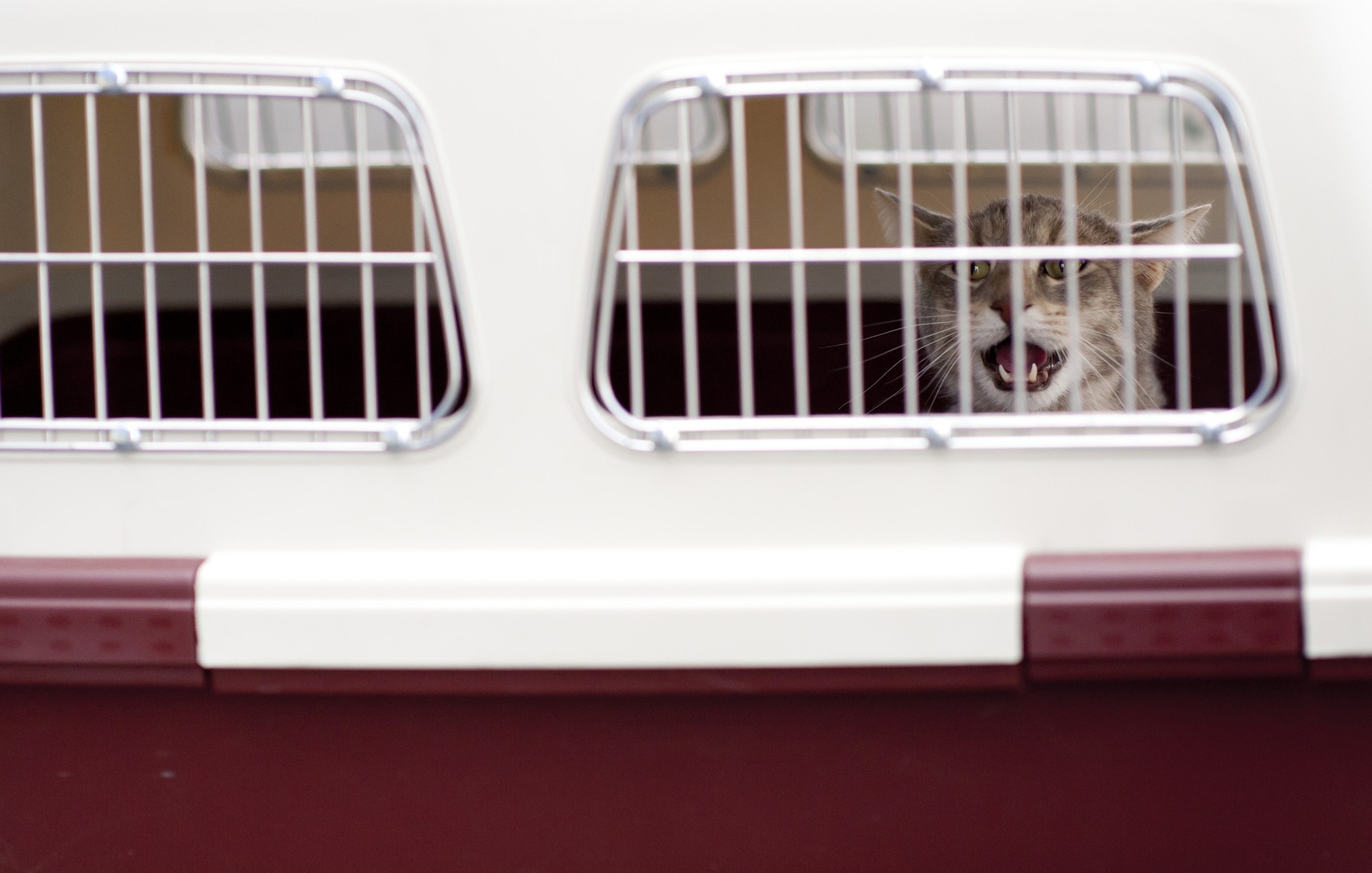 Everything You Need To Know About Airline Pet Policies