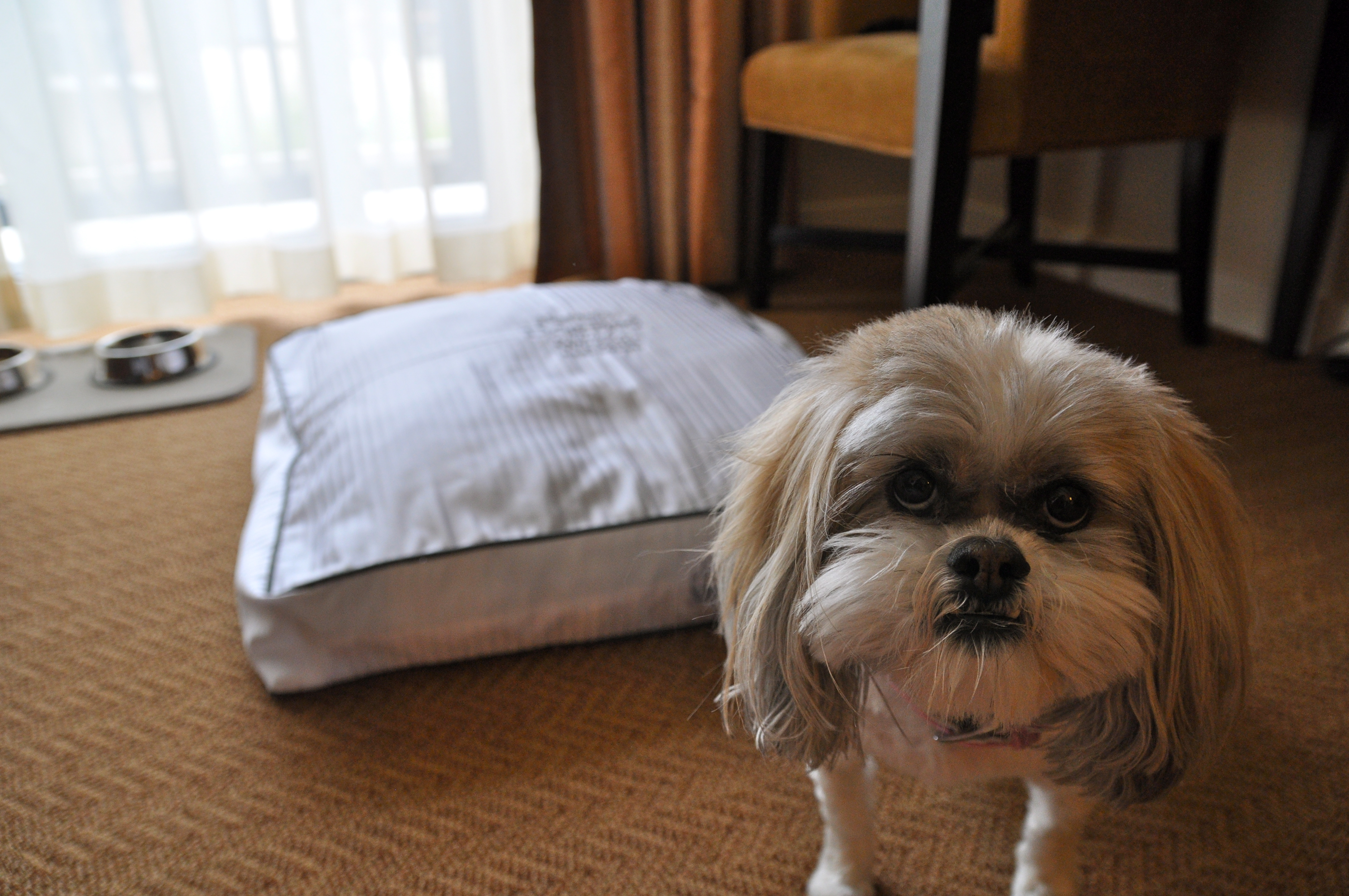 The Top 10 Pet Friendly Hotel Chains Project Pawsitivity