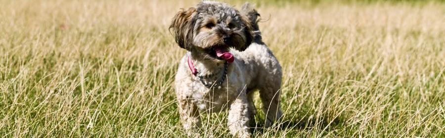 dog friendly atlanta