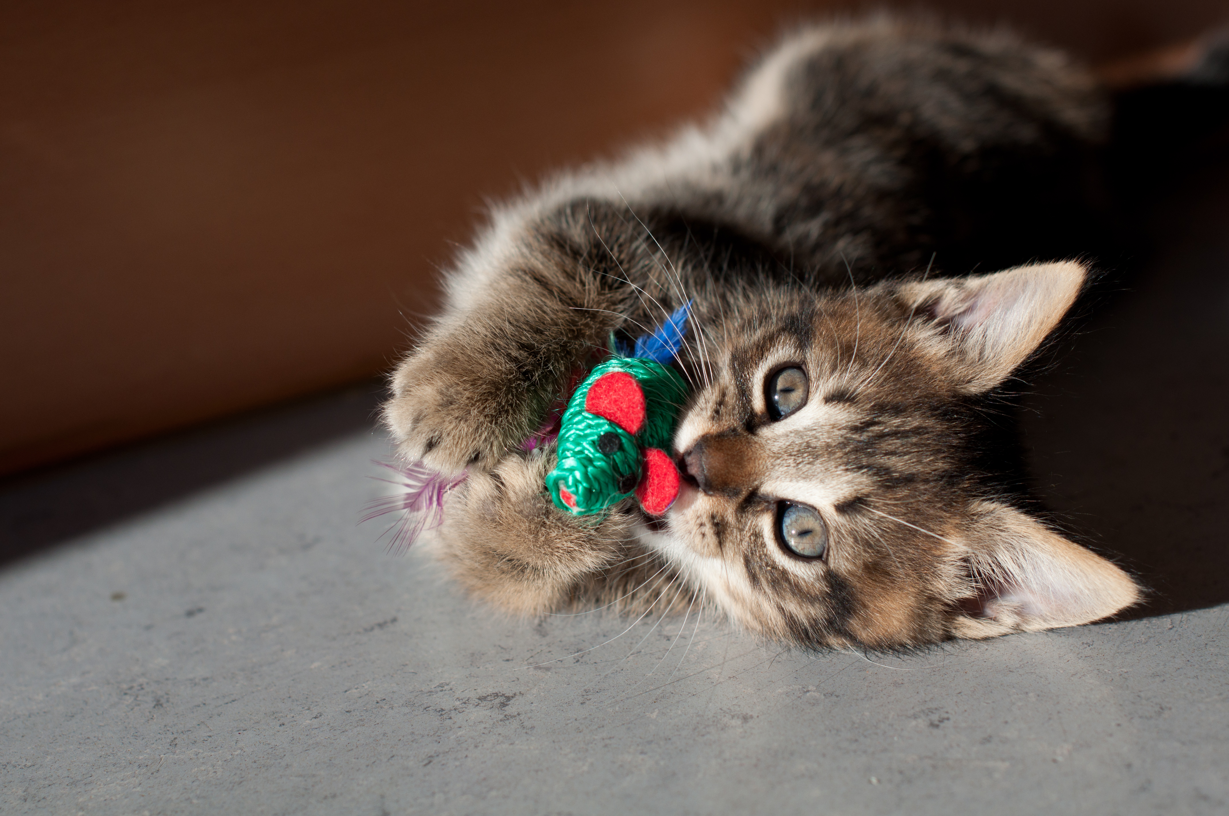 5 Ways to Keep Indoor Cats Active – Project Pawsitivity