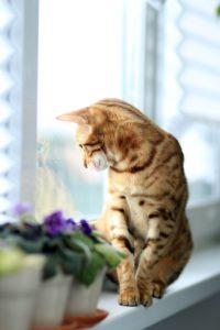 5 Ways to Keep Indoor Cats Active