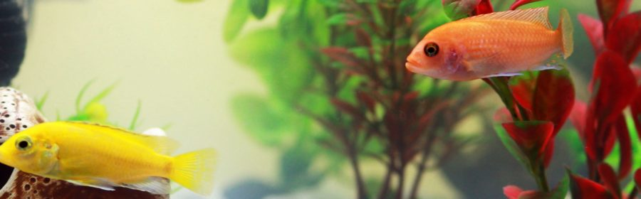 5 Unexpected Ways Being a Fish Parent Benefits You