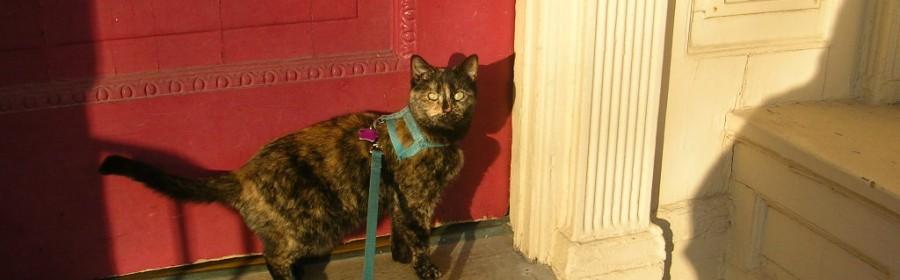 cat leash training
