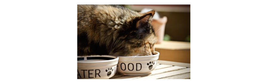 Alternative Ways to Feed Your Kitty