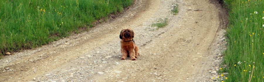 Dog friendly places Rochester