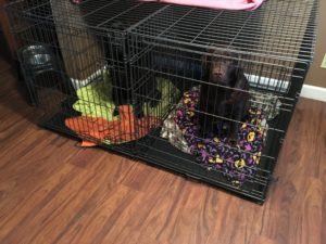Mason and Coco (crate size XXL)