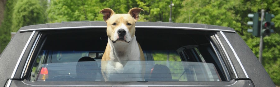 The Danger of Leaving Your Dog in the Car