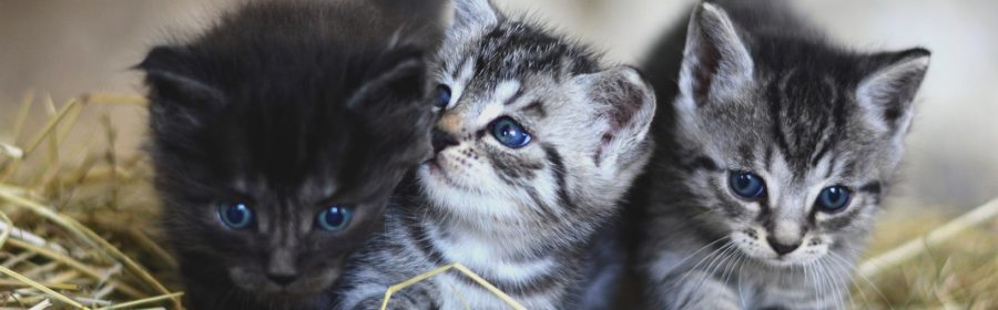 How to Pick the Best Pet for Your Family