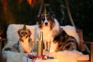 new year's resolutions for dogs
