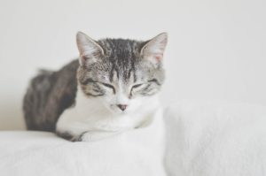 10 Things to Tell Your Cat Sitter About Your Cat