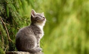 cat myths debunked