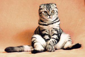 5 Weird Feline Symptoms to Keep an Eye On