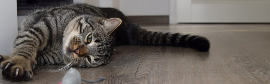 5 Reasons Why You Shouldn't Declaw Your Cat