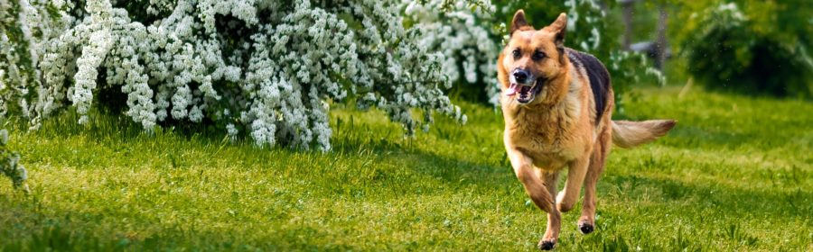Best Doggy Destinations - East Lansing