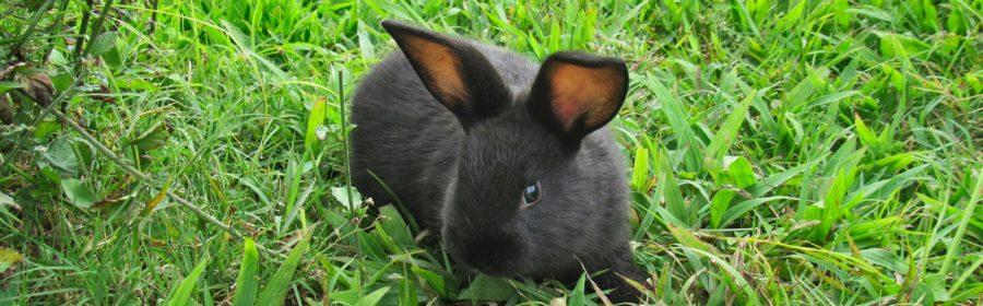 10 Bunny Behaviors Decoded