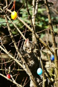4 Ways for Your Cat to Have a Purrfect Easter