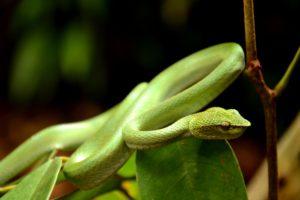 Snake Behaviors Explained