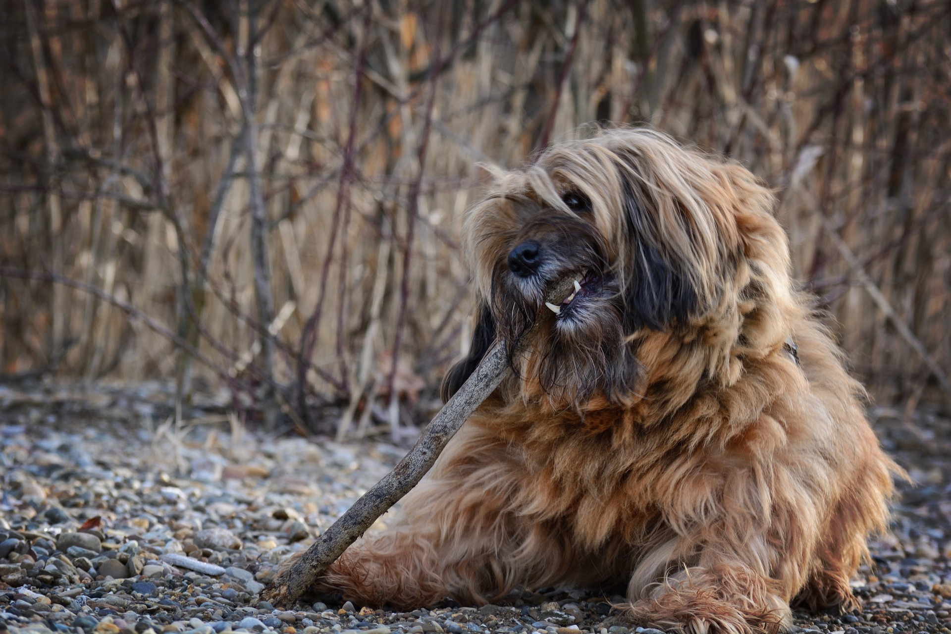 6 Tips to Stop Your Dog from Destructive Chewing – Project Pawsitivity