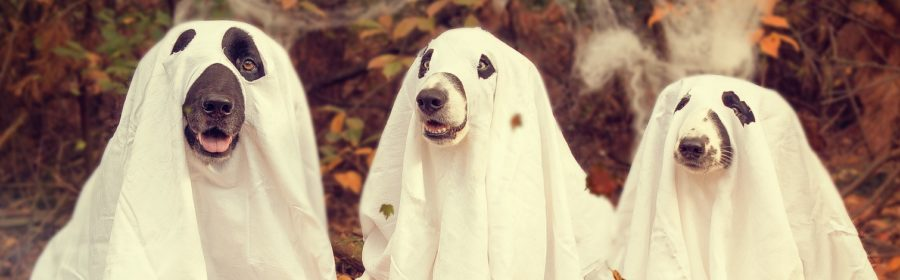 5 Halloween Costume Safety Tips for Pets