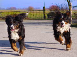 Introducing Pups