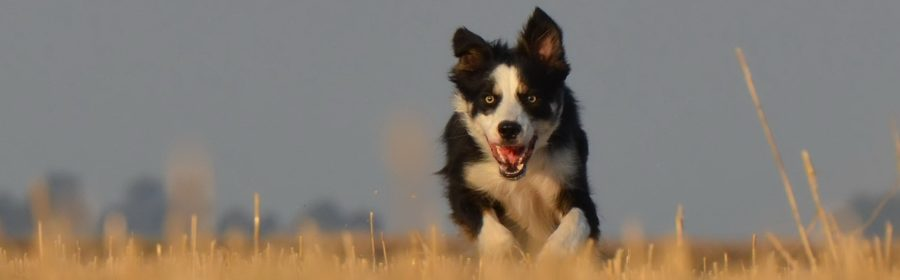 Do You Need PeShould You Have Pet Insurance?t Insurance