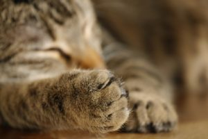 10 Quick Tips for Keeping Small Pets Safe