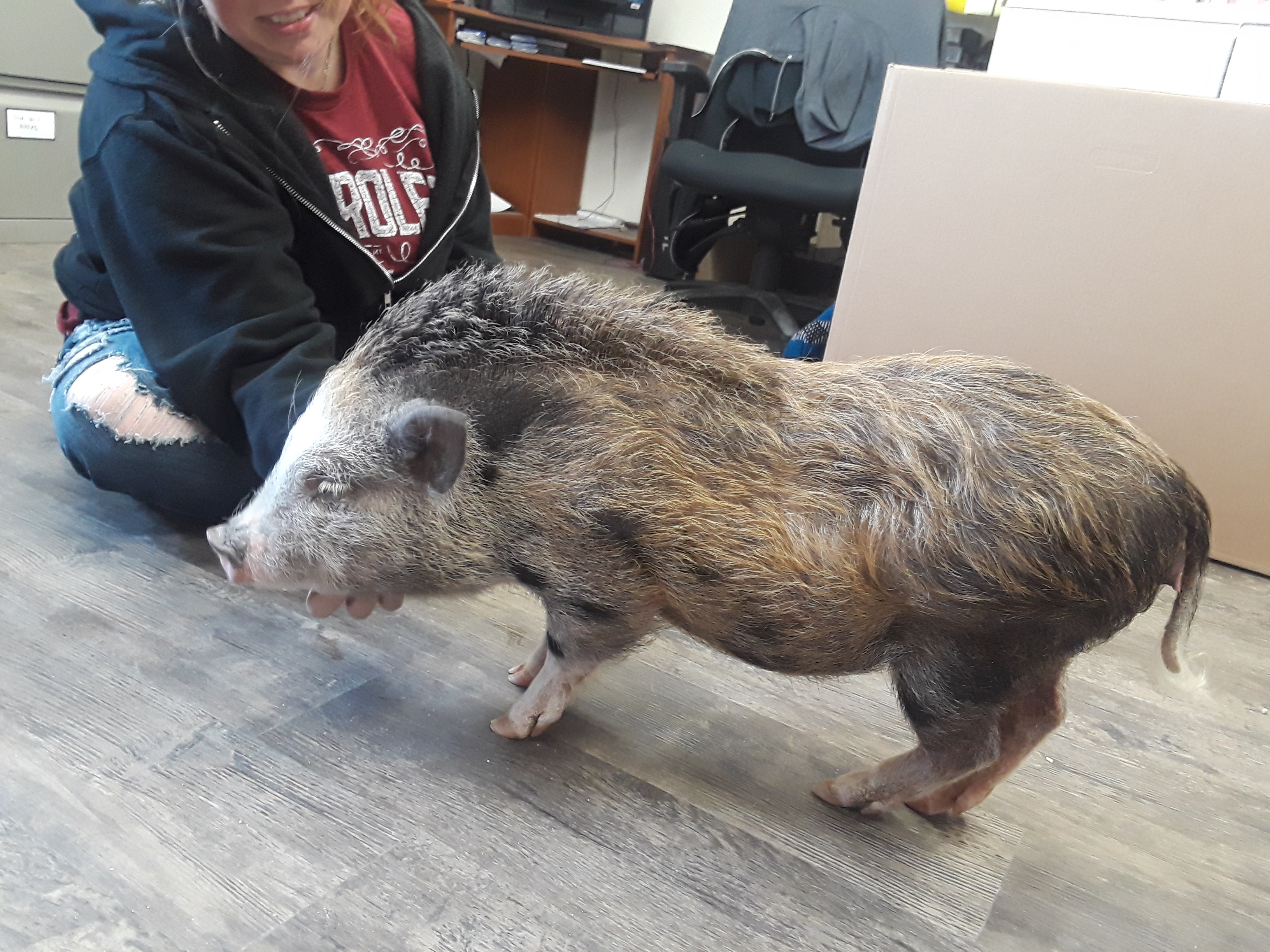 Everything You Should Know About Having a Mini Pig – Project