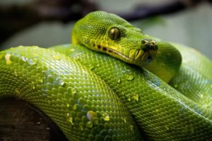 How to Choose the Right Reptile for You