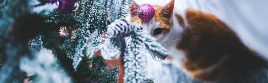 pet christmas gifts