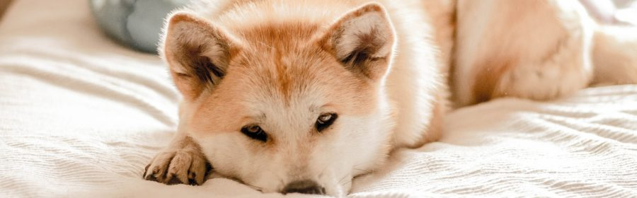15 signs your dog is sick