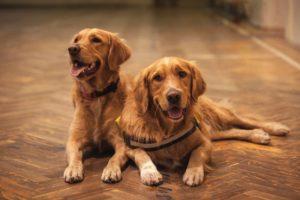 Smart Home Technology Every Pet Parent Needs